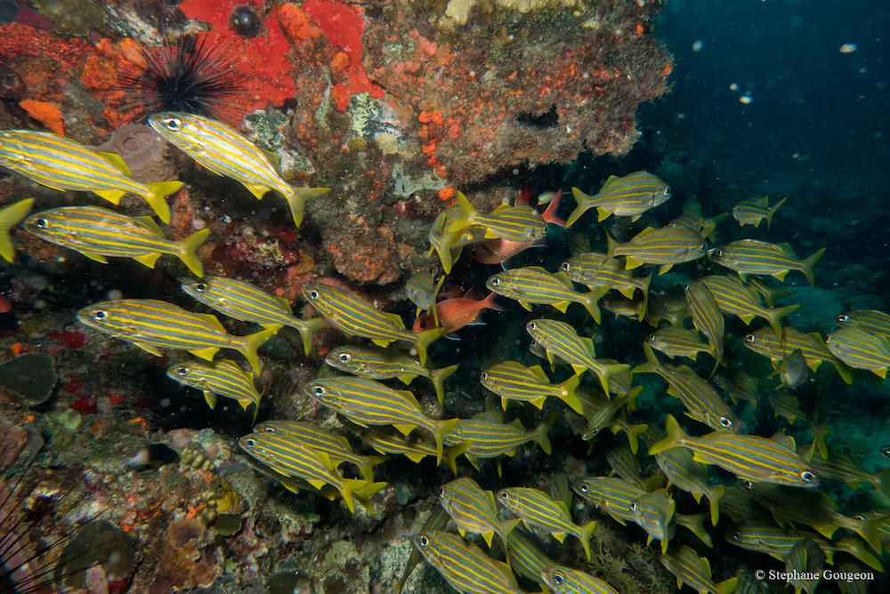 corailclubcaraibes15