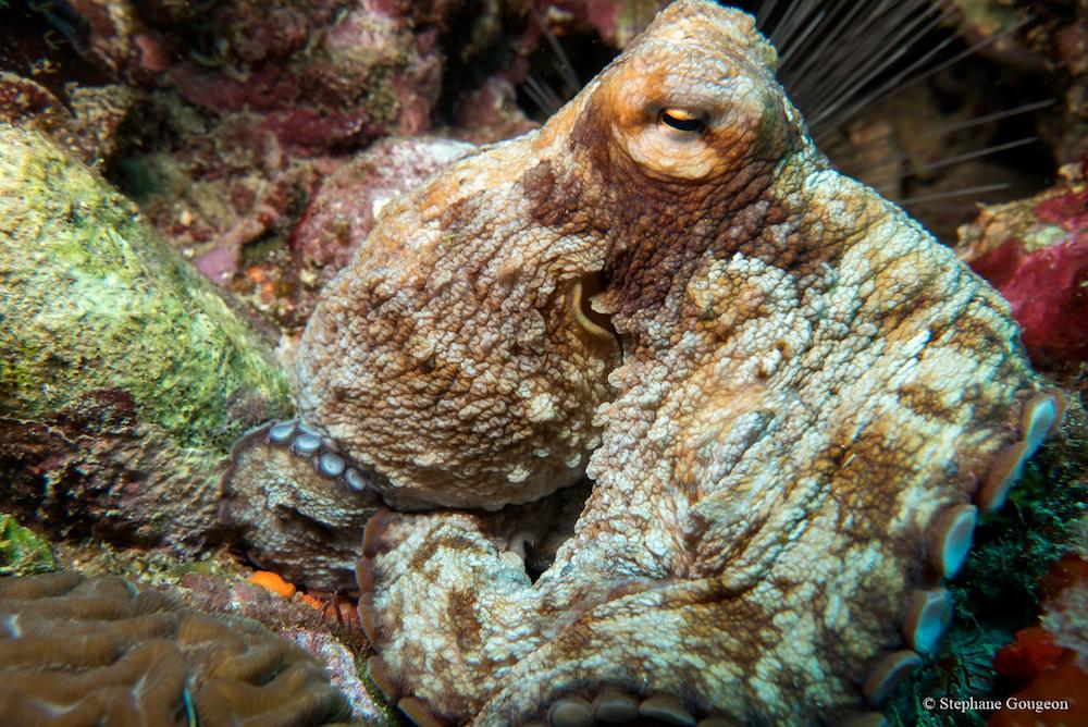 corailclubcaraibes9